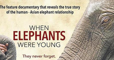 World Elephant Day 12 August