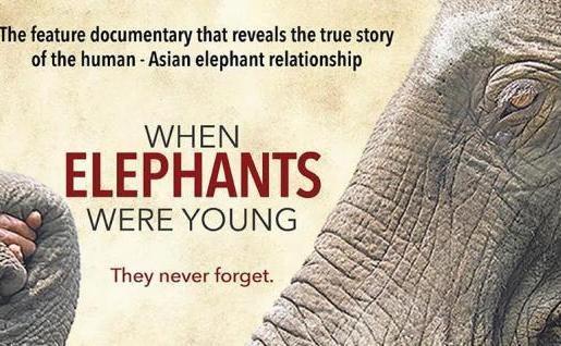 World Elephant Day 12 August